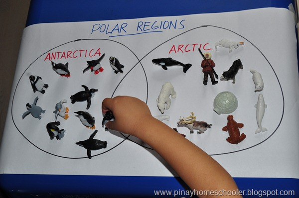 Sorting animals living in Antarctica and the Arctic