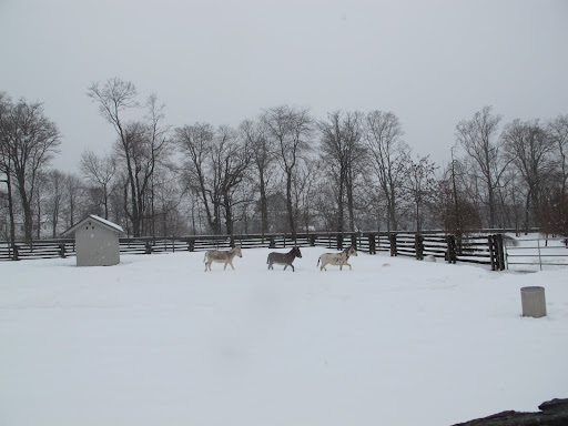 Yes G.K!  We love trotting around in the snow.  First, we go this way.....