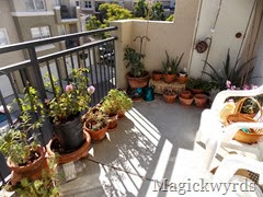october garden blog 1