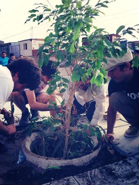 plantandoarboles.jpg