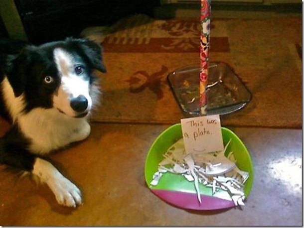 dog-shaming-bad-7