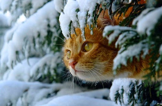 68467776_cats_and_snow_