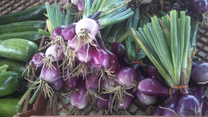 farm stand onions