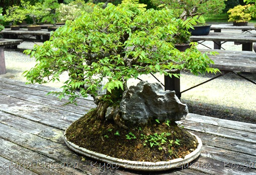 Glória Ishizaka -   Kyoto Botanical Garden 2012 - 50