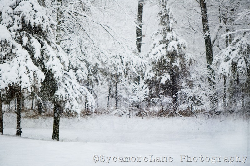 snow-9-w-SycamoreLane Photography
