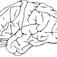 cerebro-t16581.jpg