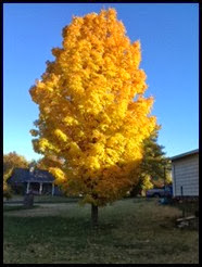 Carol Simmons.jpeg tree now