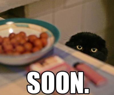 Soon cat bowl