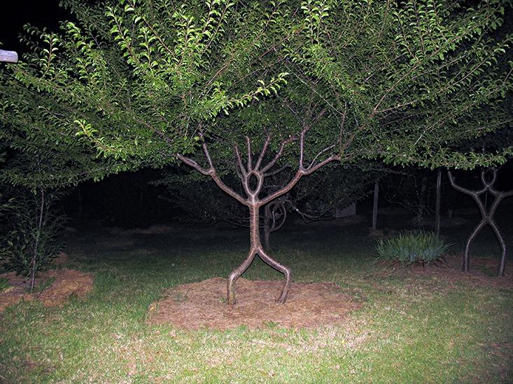 اشجار غير طبيعية انتاج الطبيعة..!