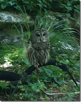 8_owl