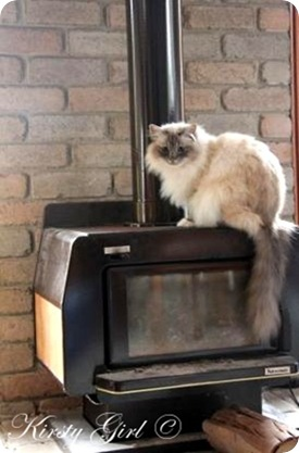 fireplace cat #2[8]