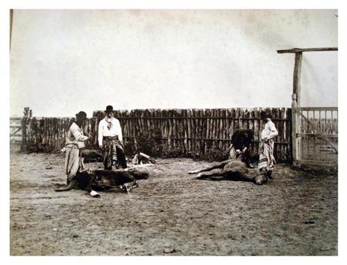 Gauchos en tareas de campo probablemente en Estancia San Juan de Pereyra Iraola, by Francisco Ayerza [Colección Witcomb, Archivo General de la Nación]