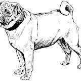 perros de raza colorear
