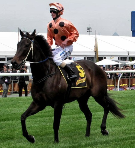 race5_black caviar4