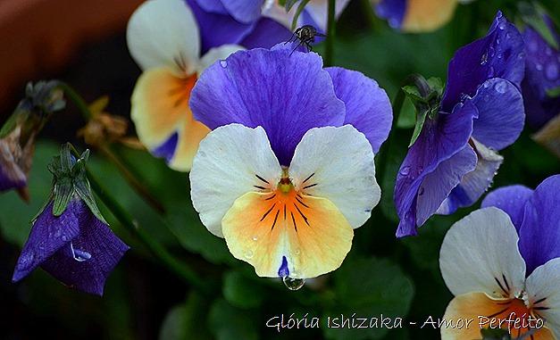 amor perfeito - Glória Ishizaka.2