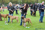 20100513-Bullmastiff-Clubmatch_30928.jpg