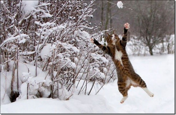cats-play-snow-11