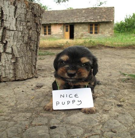 nicepuppy