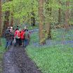 tussen wilde hyacinten in Bellegembos.jpg