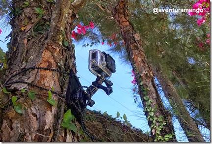 Unidade de Fixação presa a uma árvore