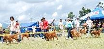 exposicion canina colombia