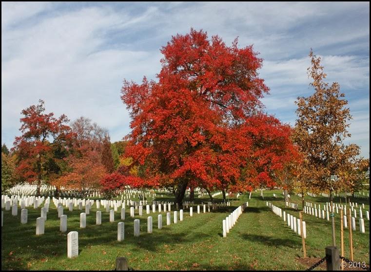 Arlington foliage 4