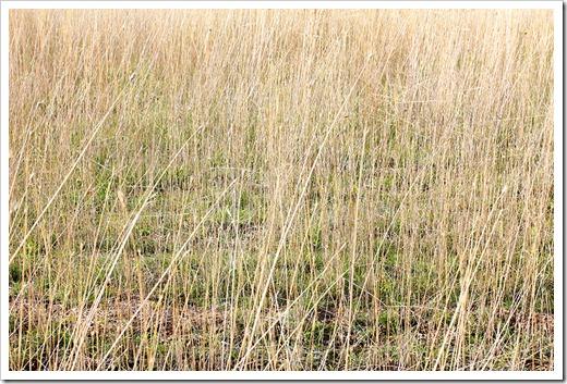 111124_grasses