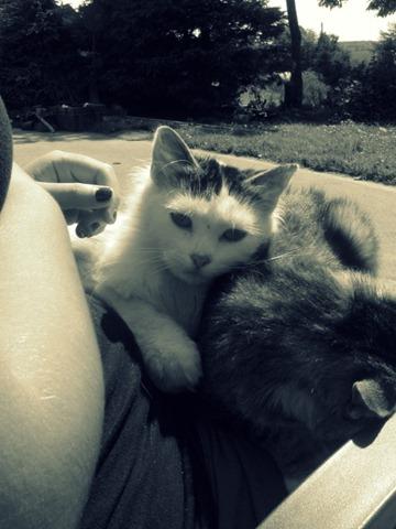 summer20111 385