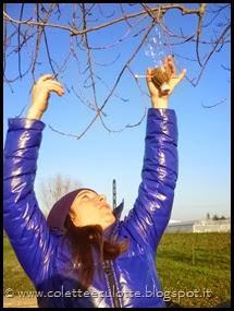 Ghiotte leccornie per gli uccellini dell'OrtoQua (38)_thumb[1]