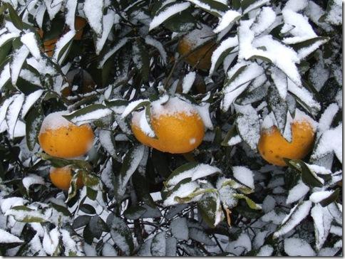 snow_oranges