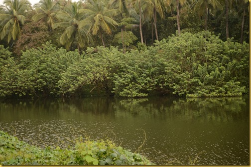 River Taj Vivanta Bekal Fort, Bekal Fort, River Kerala, Bekal Fort Kerala , green Kerala photo