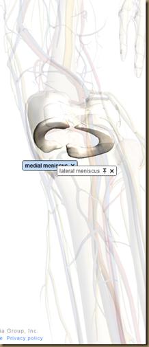 meniscus 2