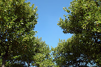 Lying under the trees