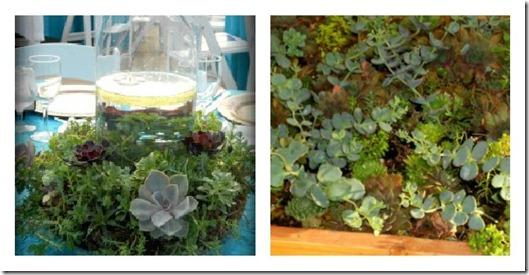 succulents collage