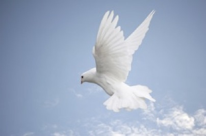grief_counseling_dove-2012-12-14-19-23.jpg