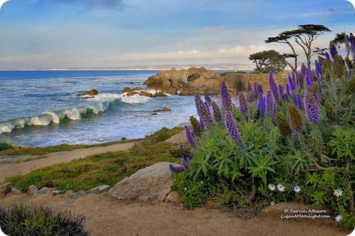 Honeymoon destination in Monterey