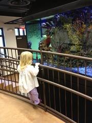 st agnes aquarium