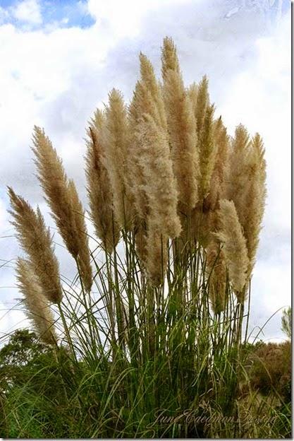Grasses_kk_autumnburst