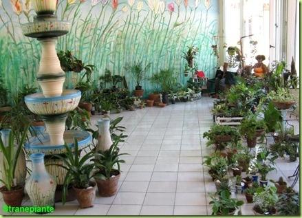 interno floreria yarima santiago cuba