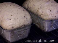sprouted-einkorn-bread 020