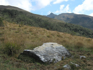 Chingaza-Sur-Organos (03).jpg