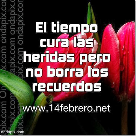 frases amor 14febrero-net (5)