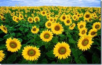 استيراد زيت عباد الشمس تركيا