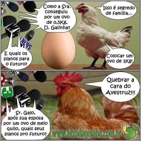 Segredo de família: galinha põe ovo de meio quilo e galo quer quebrar a cara do avestruz