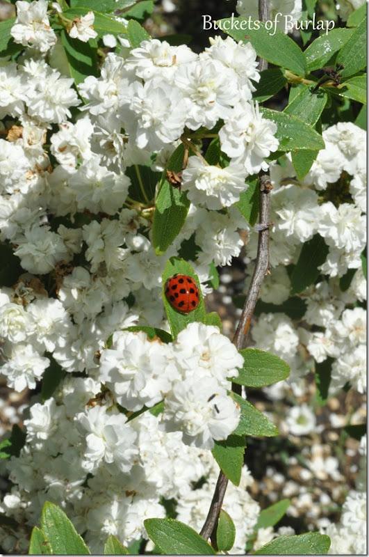 spring garden 8