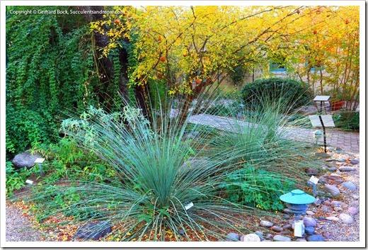 131203_TucsonBotanicalGarden_179