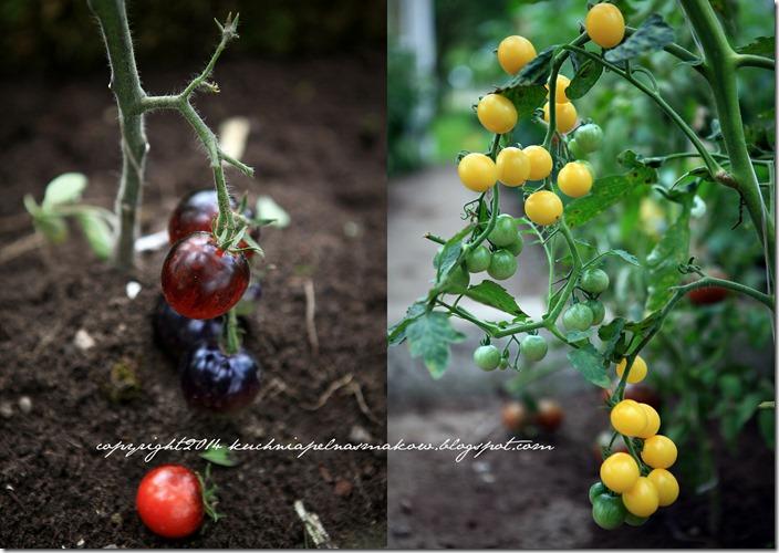 Pomidory mojej mamy i tarta z pomidorami  w wersji klasycznej i bezglutenowej1
