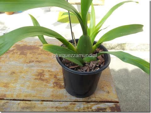 Blog mundial - Orquídea Hav 2