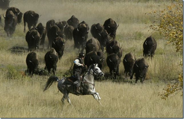 Wranglers work to control the herd as they move toward the corral area Monday during the annual buffalo roundup at Custer State Park. The roundup allows park officials to manage the herd and cull animals for sale to keep the population around 1,000.  (Elisha Page/Argus Leader)