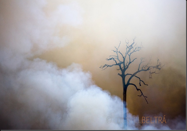 Fires burn the Amazon rainforest to clear the ground for cattle or crop farming in Sao Felix Do Xingu municipality, in Para State, Brazil, August 13, 2008.<br />Daniel Beltra/Greenpeace